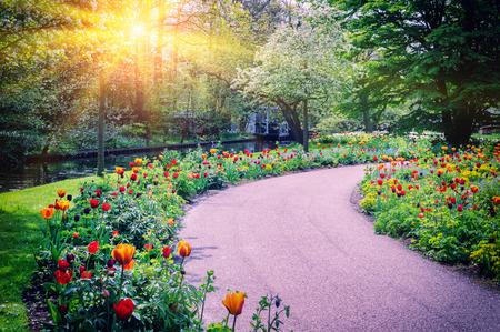 Spring landscape with colorful tulips. Keukenhof garden, Netherlands 写真素材