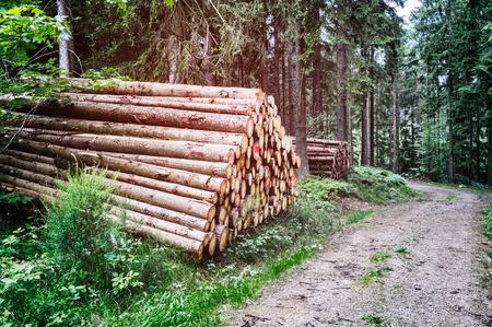 Log stapels langs het naaldbos weg