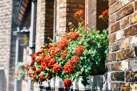 geranium: Old house facade decorated with red geranium Stock Photo