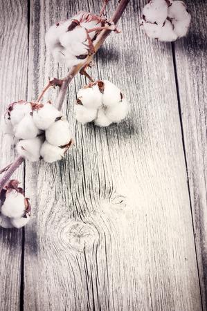 古い木製の背景に熟した繭の枝 写真素材