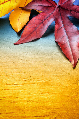 colorful tree: Autumn background with colorful  tree leaves and copyspace