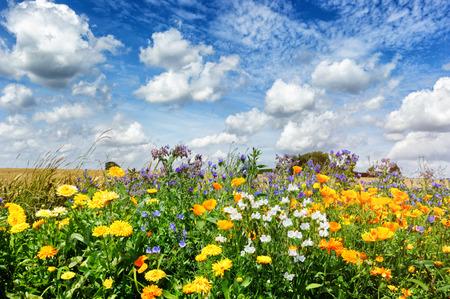 Landschap met kleurrijke zomerbloemen Stockfoto