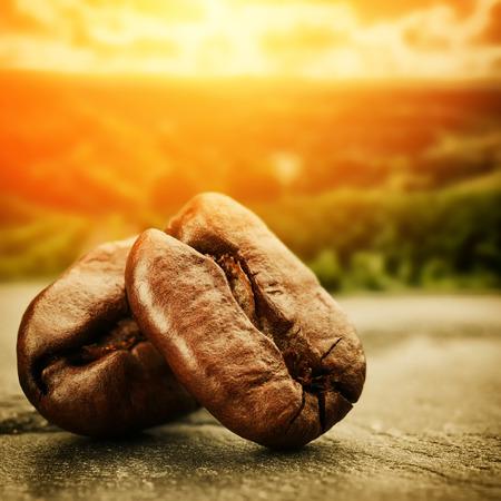 bönor: Kaffebönor med solnedgång över plantage dal på bakgrund