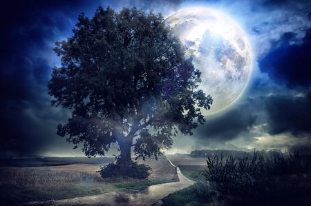 夏の夜のトウモロコシのフィールド上の満月