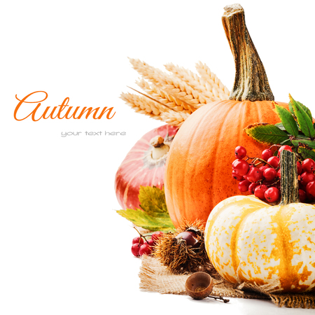 Autumn setting with various pumpkins and rowan berry photo