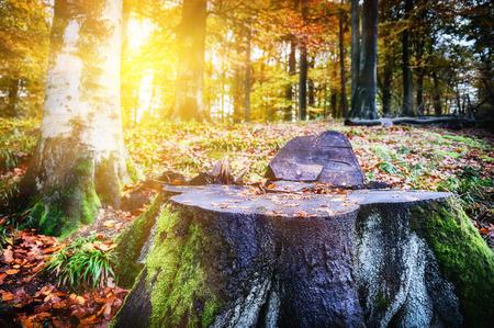Paesaggio con grande tronco d'albero in autunno foresta