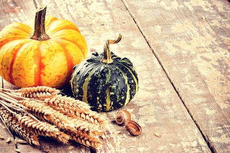 Autumn still-life with pumpkins and wheat in rustic setting photo