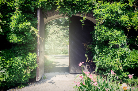 doorways: Old wooden gate with lianas. Entrance to the park Stock Photo