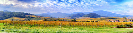 rhone: Autumn landscape with golden vineyards of wine route. France, Alsace Stock Photo