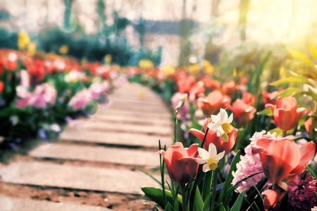 多色の花によって囲まれるばね公園のパス 写真素材