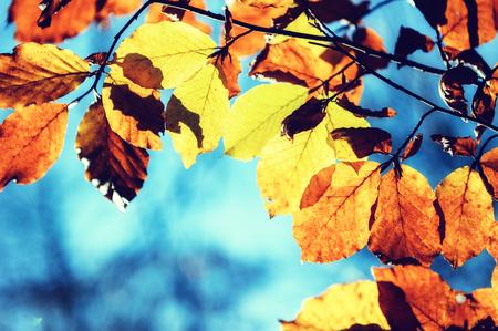 hojas antiguas: Fondo de oto�o con hojas de colores en un d�a soleado Foto de archivo