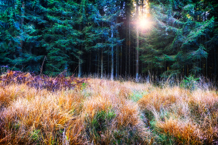 redwood: Beautiful autumn forest in green and orange tone Stock Photo