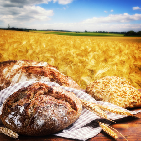 life loaf: Freshly baked traditional bread with golden wheat field on background