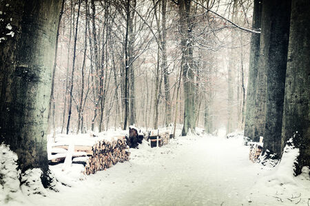 Winter forest landscape with snow covered footpath photo