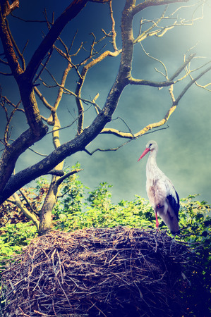 mystical forest: Beautiful landscape with wild stork in nest