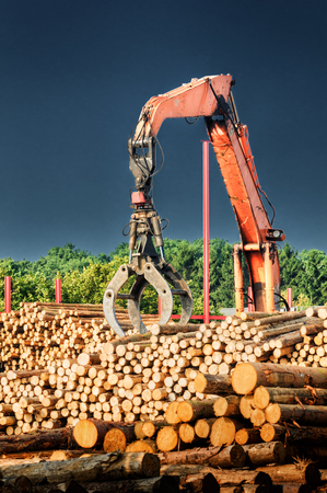 lumber industry: Loading machine at work at lumber mill Stock Photo
