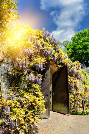 open gate: Old wooden gate in a city park with wisteria flowers at summer day