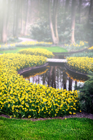 Spring landscape with yellow daffodils and small decorative pond Stock Photo