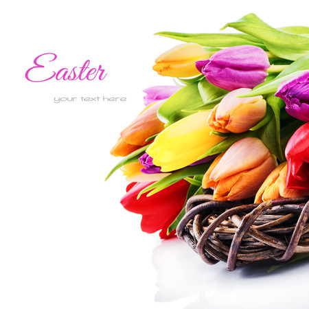 white space: Easter setting with colorful tulips isolated over white
