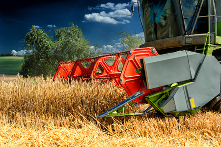 harvester: Combine harvester working at wheat field Stock Photo