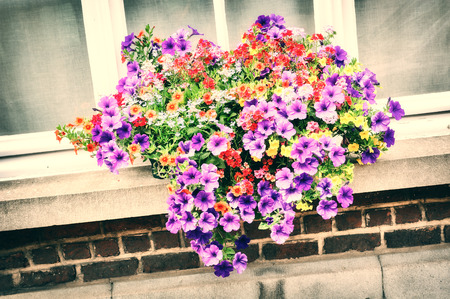 House window decorated with colorful petunias photo
