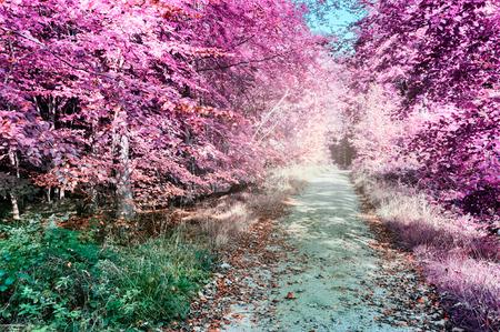 morado: Púrpura del paisaje forestal de infrarrojos con la senda para peatones