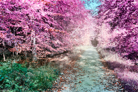 Paarse infrarood boslandschap met voetpad
