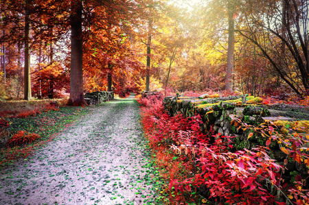 autumn path: Autumn landscape with forest path in red tone