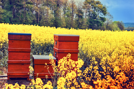 Summer landscape with beehives in a field with blooming flowers