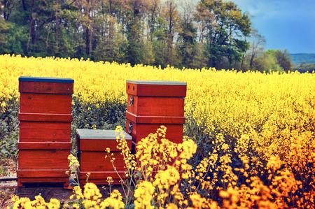 Zomer landschap met bijenkorven in een veld met bloeiende bloemen