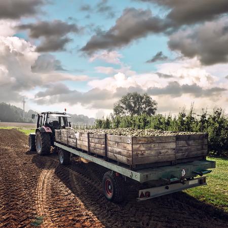 transporte: Trator velho transportando caixas de madeira com peras recém-colhidas