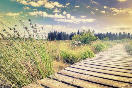 way: Beautiful summer landscape with wooden plank board walkway
