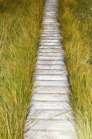 walkway: Wooden plank board walkway surrounded by green grass