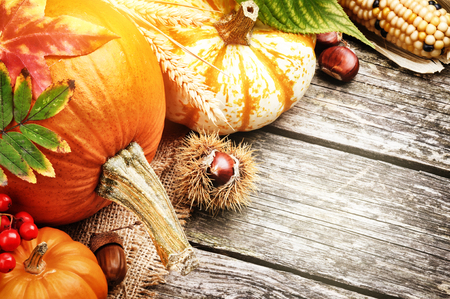ash gourd: Autumn still-life with pumpkins and corn on wooden background Stock Photo