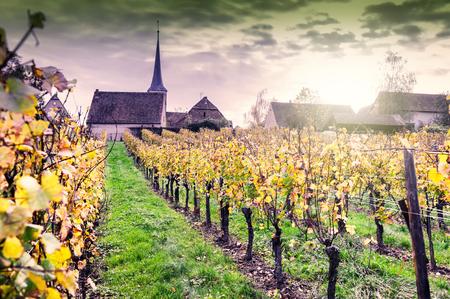Sonnenuntergang über Herbst Weinbergen der Weinstraße. Frankreich, Elsass