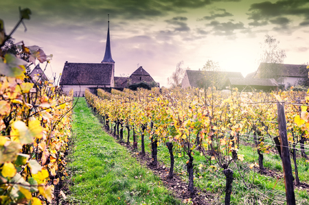 Sunset over autumn vineyards of wine route. France, Alsace Imagens