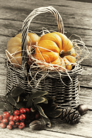 ash gourd: Autumn still-life with pumpkins in rustic basket