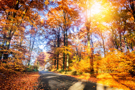 autumn landscape: Autumn landscape with country road in orange tone