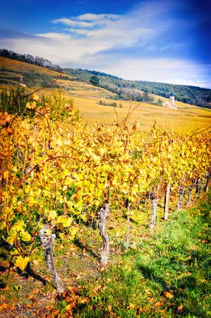 haut: Landscape with autumn vineyards of wine route. France, Alsace