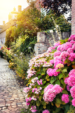 flowers sun: Street decoration with pink hortensias. Sweet home concept