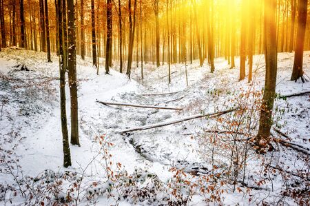 snow covered forest: Winter landscape with snow covered forest stream