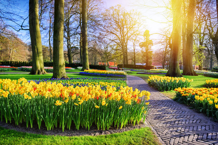 Spring landscape with park alley and yellow daffodils at sunny spring day