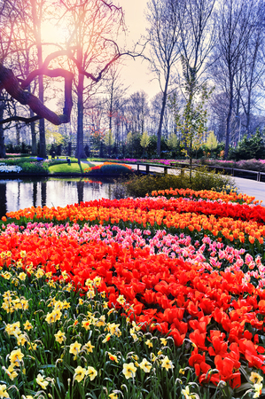 walkway: Spring landscape with colorful seasonal flowers. Nature background