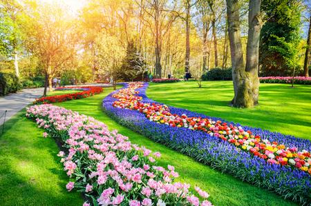 Lente landschap met veelkleurige tulpen. Natuur achtergrond