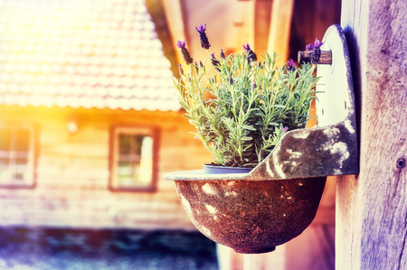 herbs of provence: Home decoration with hanging flower pot with lavender