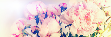 pink flowers: Pink peonies on pastel background with copyspace. Mothers day concept