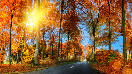 Sunny autumn landscape with country road in orange tone. Nature background