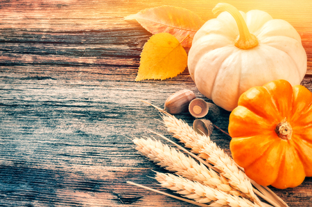 Autumn still-life with pumpkins and wheat in rustic setting with copyspace