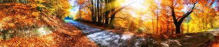 Panoramisch herfst landschap met landweg in oranje toon. Natuur achtergrond