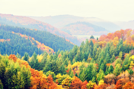 fall landscape: Autumn landscape with colorful fall trees. Top view, aerial. Fall nature background